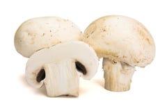 Mushrooms. Fresh mushrooms, isolated on white Royalty Free Stock Images