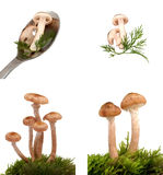 Mushrooms. Fresh wild mushrooms four images Royalty Free Stock Photos