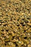 Mushrooms. Mushroom market display in Spain royalty free stock image