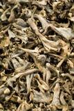 Mushrooms. Mushroom market display in Spain Royalty Free Stock Images