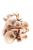 Mushrooms. Raw mushrooms on a white background close up Royalty Free Stock Image