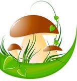 Mushrooms. Big mushroom on green grass. vector illustration Royalty Free Stock Images