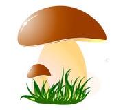 Mushrooms. Big mushroom on green grass. vector illustration Stock Image