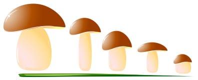 Mushrooms. Big mushroom on green grass. vector illustration Stock Images