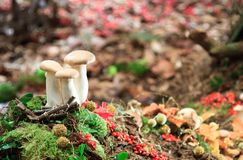 Mushrooms. A trio of mushrooms a mound of leaves along a forest path royalty free stock photography
