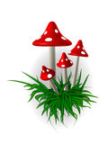 Of mushrooms. In the picture painted by inedible mushrooms four pieces in the green grass Stock Photos
