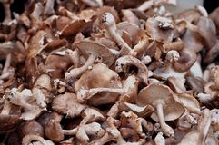 Mushrooms. This picture is a representation of mushrooms on a farm bench Royalty Free Stock Image