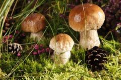 Free Mushrooms Stock Image - 15979001