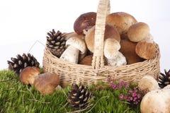 Free Mushrooms Royalty Free Stock Images - 15994539