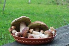 Mushrooms. Delicatessen russian white mushrooms on the dish Stock Image