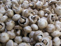Mushrooms. At the market stall fill the image royalty free stock photography