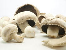 Mushrooms. Mixed fresh organic and biological mushrooms royalty free stock images