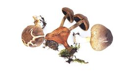 Mushrooms. Of different types isolated on white background Stock Photo