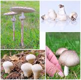 Mushrooms. Composition of different types of mushrooms in the field Royalty Free Stock Images