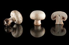 Mushrooms. Over a black  background Stock Photo