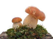 Free Mushrooms Royalty Free Stock Image - 18900546