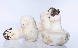 Mushrooms. Stock Image