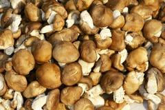 Mushrooms. The background of fresh mushrooms Stock Images