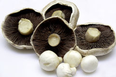 Mushrooms. Plate of unpealed fresh mushrooms, flat, field and button Royalty Free Stock Photos