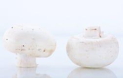 Free Mushrooms 2 Stock Photos - 15463623