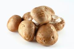 Mushrooms. Group of organic mushrooms isolated on white background Stock Photos