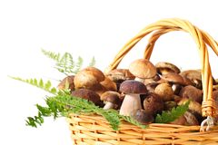 Mushrooms. Basket full of different mushrooms isolated on a white background Stock Image
