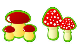 Mushrooms. Stock Images