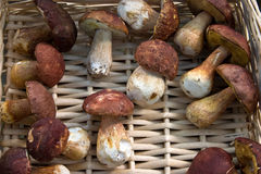 Mushrooms. In a wicker basket Royalty Free Stock Image