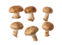 Free Mushrooms Royalty Free Stock Photography - 24323787