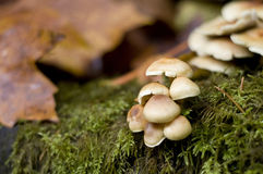 Mushrooms Royalty Free Stock Photography