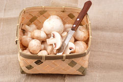 Mushrooms. Many mushrooms in the basket Stock Photography