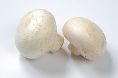 Mushrooms. Close-up photo of mushrooms isolated on white Stock Image
