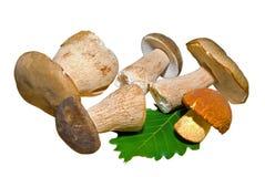 Mushrooms 3 Royalty Free Stock Image