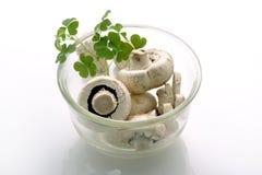 Mushrooms. Image of fresh mushrooms isolated of white background Royalty Free Stock Photography