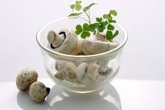 Mushrooms. Image of fresh mushrooms isolated of white background Stock Images