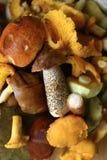 Mushrooms. Lots of mushrooms: Cantharellus, Leccinum, Suillus, Xerocomus Royalty Free Stock Photography