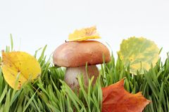 Mushrooms. In a grass isolated on white Royalty Free Stock Image