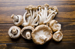Mushrooms Stock Image