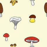 Mushrooms4 库存图片