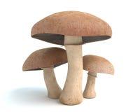 Free Mushrooms Royalty Free Stock Photos - 56067058