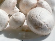 Mushrooms. Over white Stock Image