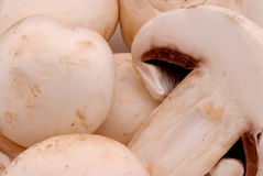 Mushrooms. In a bowl royalty free stock photography