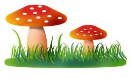 Mushrooms. On white background. Digitally drawing Stock Photos
