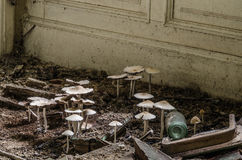 Mushrooms in abandoned house Stock Image