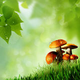 Mushrooms. Royalty Free Stock Image