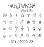 Vector doodles set of autumn forest plants and seeds. Royalty Free Stock Photo