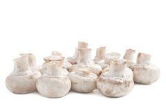Mushrooms against white background Stock Photos