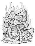 Mushrooms. Amanita. Coloring page Royalty Free Stock Images