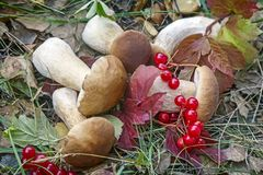 Mushrooms And Wild Berries In The Meadow. Royalty Free Stock Photo