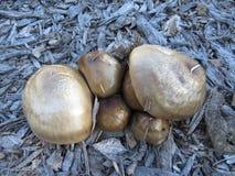 Mushrooms Anyone? Royalty Free Stock Photography